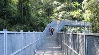 ทางเดินลอยฟ้า Canopy walks