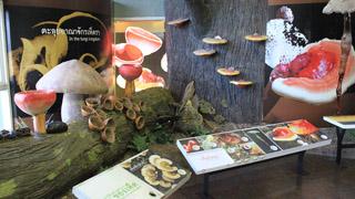 พิพิธภัณฑ์ธรรมชาติวิทยาเกาะและทะเลไทย