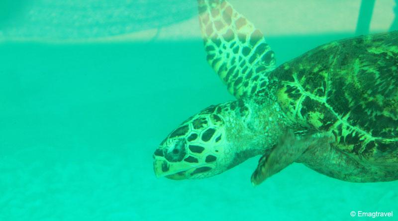 ศูนย์อนุรักษ์พันธุ์เต่าทะเลกองทัพเรือ