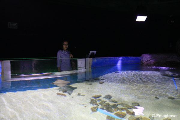 บ่อปลากระเบน