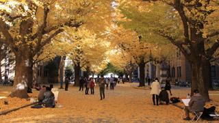 โทได Tokyo University