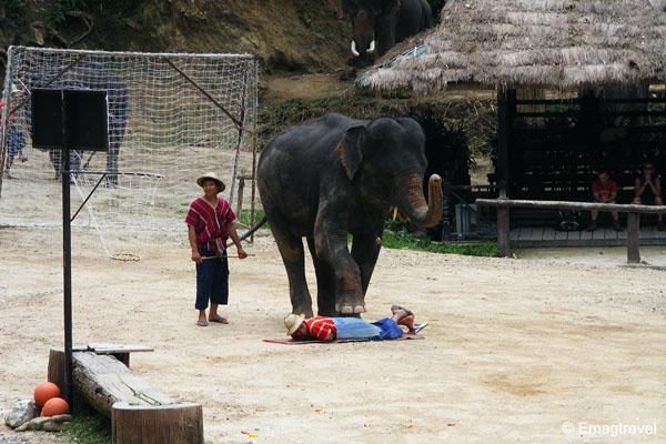 ช้างนวดควาญ