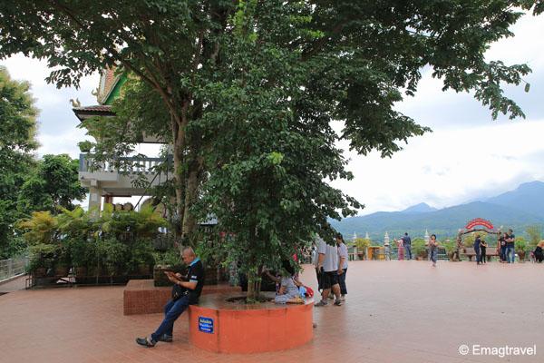 ต้นดิกเดียม